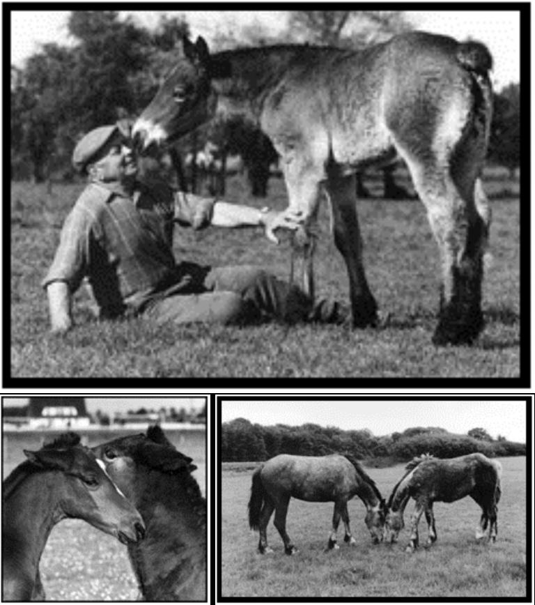 Exposition Picardie Horse de Klaod Roparz